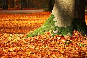 12 Fall Maintenance Tasks to Do Now